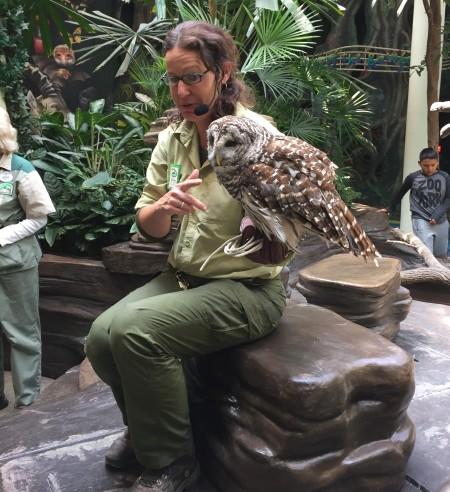 Animal Kingdom Animal Encounters -Magoo