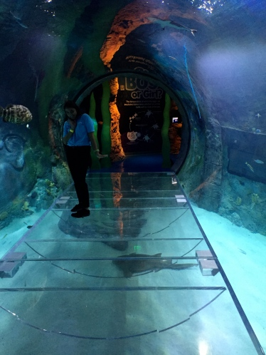 Sea Life Orlando 360 degree Tunnel