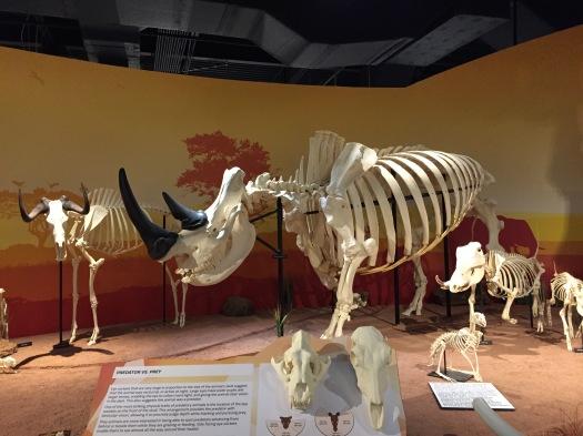 Skeletons Museum Orlando