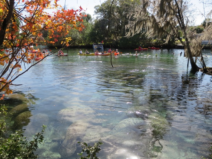 Three Sisters Springs Crystal River, FL