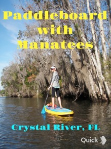 Paddleboard with Manatees at Three Sister Springs in Crystal River, FL