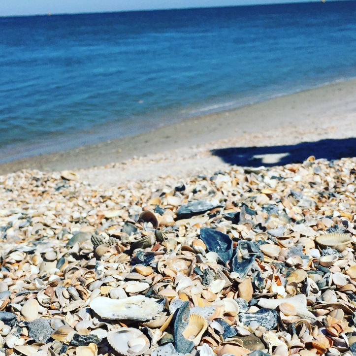 Amelia Island - Shells at Fort Clinch