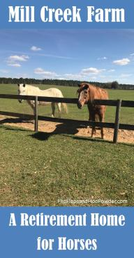 A retirement home for horses where you can feed the horses every Saturday from 11:00AM - 3:00PM in Alachua, Florida
